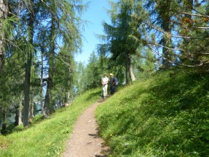 Larch trees - to Cima Cacciatori